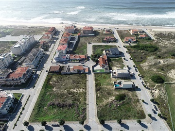 Lot / Vila do Conde, Árvore